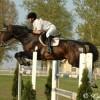 A Magyar sportló – legfiatalabb lófajtánk