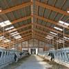 Állategészség védelem: A szél szerepe
