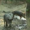 Állategészség védelem: A seb