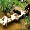 A macskák kommunikációja