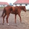 Állategészségvédelem: A hajlamosság (diszpozíció)