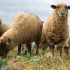 Állategészség védelem: Szaporodásbiológiai kórformák és szülészeti betegségek