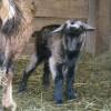 Állategészség védelem: Hurutos tőgygyulladás