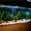 Aranyhalak tartása akváriumban