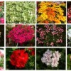 Az egynyári virágok meghatározása