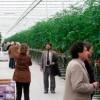 Növényházi technológia
