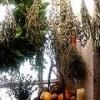 Gyógynövények tartósítása szárítással