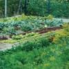 Bioművelés