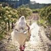 Az új divat az esküvői fotózásban: TTD