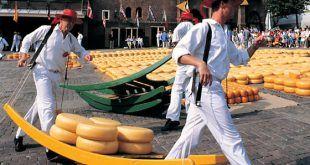Cheese-masters-in-Alkmaar