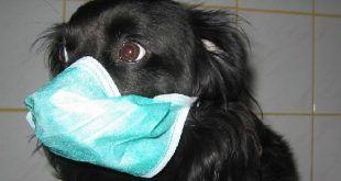 Tüdővizenyő és tüdőtágulat a kutyáknál