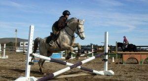cute-20horse-20jumping