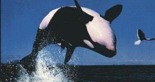 delfin0081
