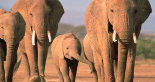 elefant_elephant17