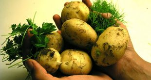 krumpli3