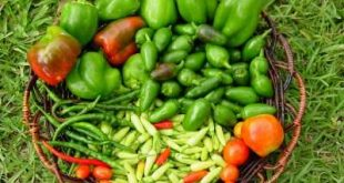Plant-peppers-in-your-vegetable-garden