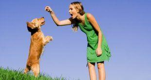 girl training dog