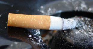 dohány